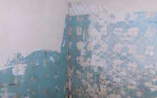 Укладка плитки на окрашенную стену: можно ли?